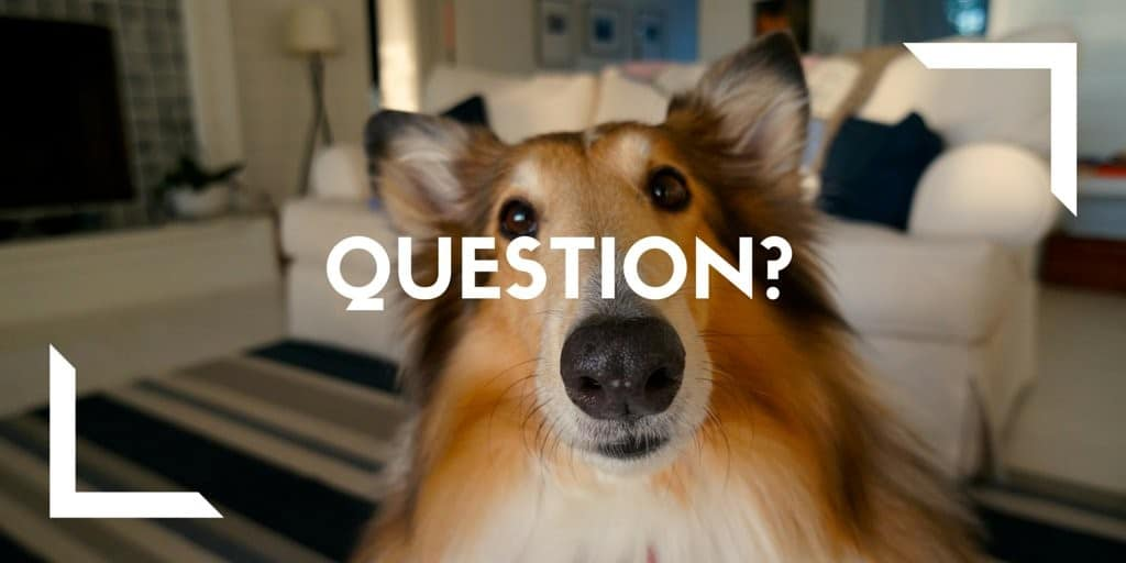 question with a dog mascot