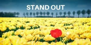 Red flower standing out in a field of yellow flowers: Make A Useful Small Business Website To Stand Out From The Crowd
